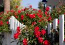 Garden design with red