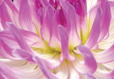 Beauty in a bulb: 6 summer magicians for glowing colour