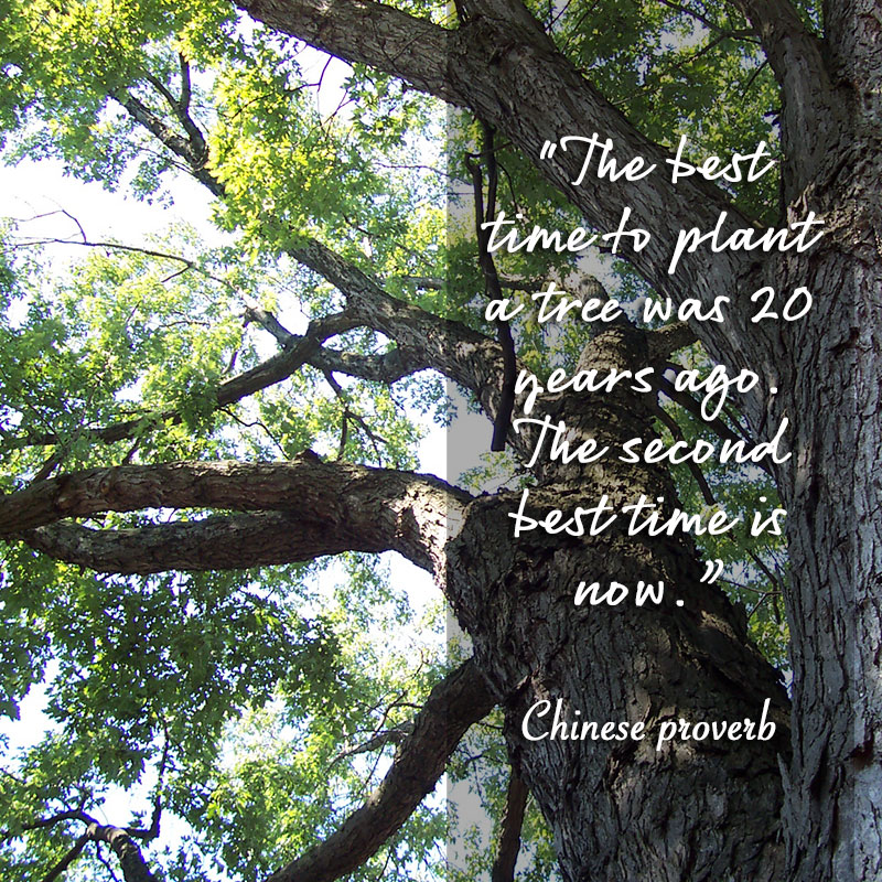 The best time to plant a tree was 20 years ago. The second best time is now. ~Chinese Proverb
