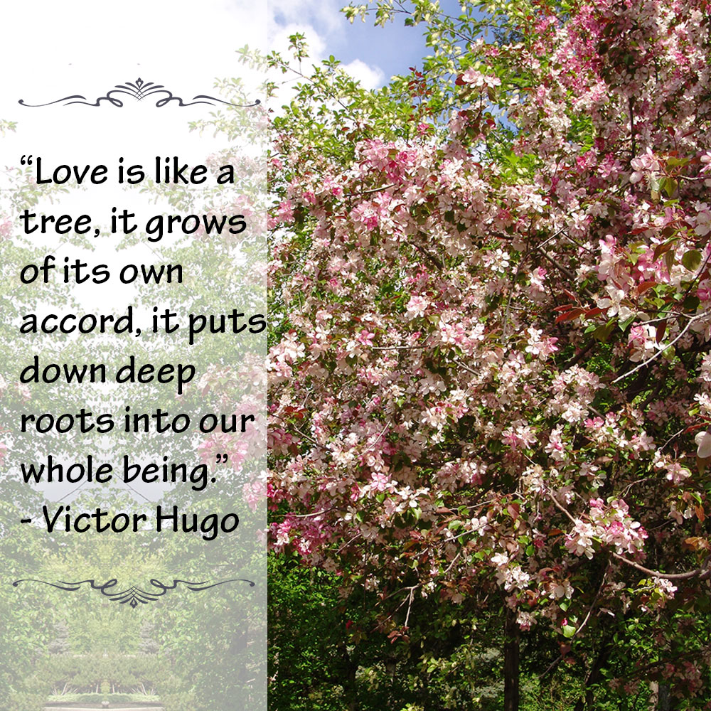 Love is like a tree, it grows of its own accord, it puts down deep roots into our whole being. ~Victor Hugo