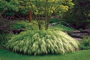 Perennials for Dry Shade Gardens