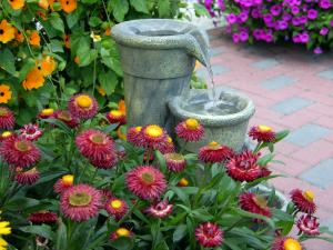 Drought Tolerant Annuals